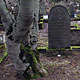 12 March 2012 – The old graveyard. And old trees. (8 pictures)